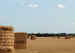 Bales in the Lowlands